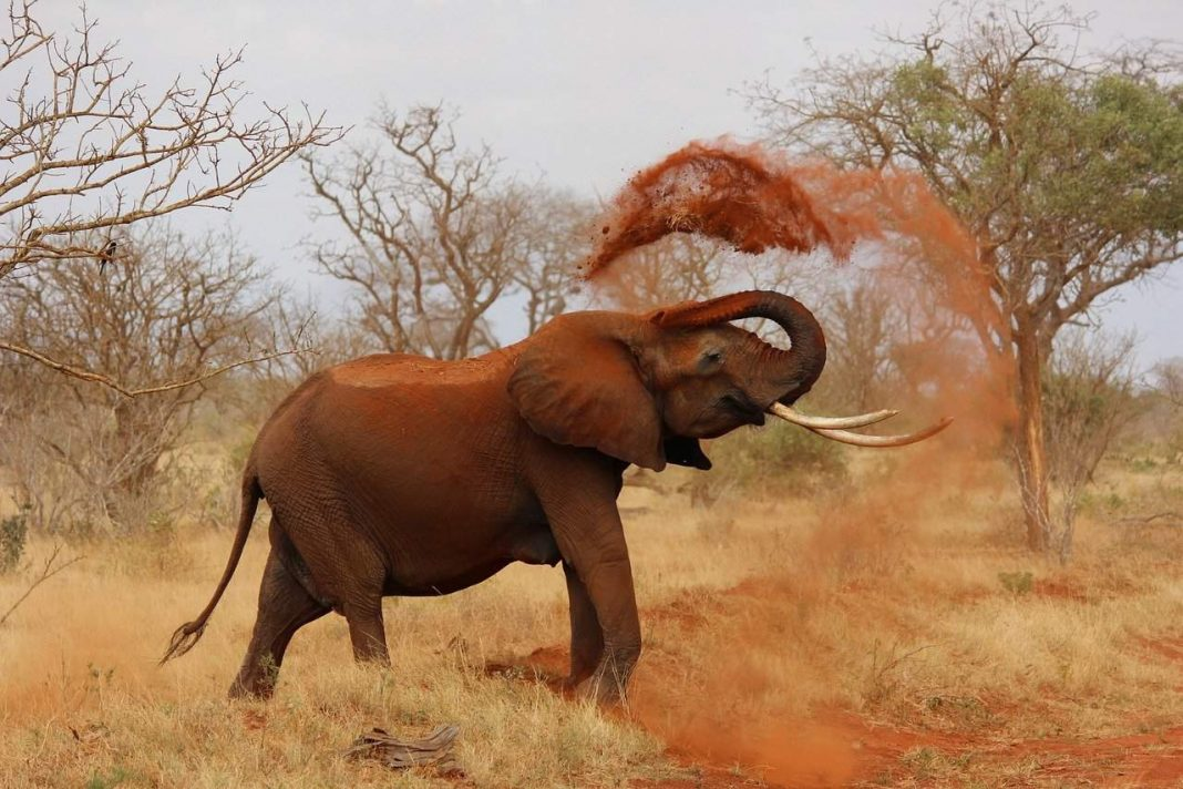 Top 10 Amazing Facts About Elephants