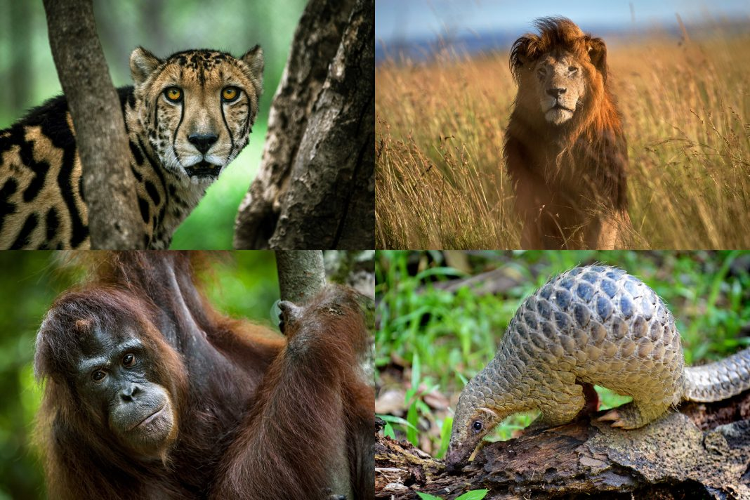 Top 10 Endangered Species in the Planet