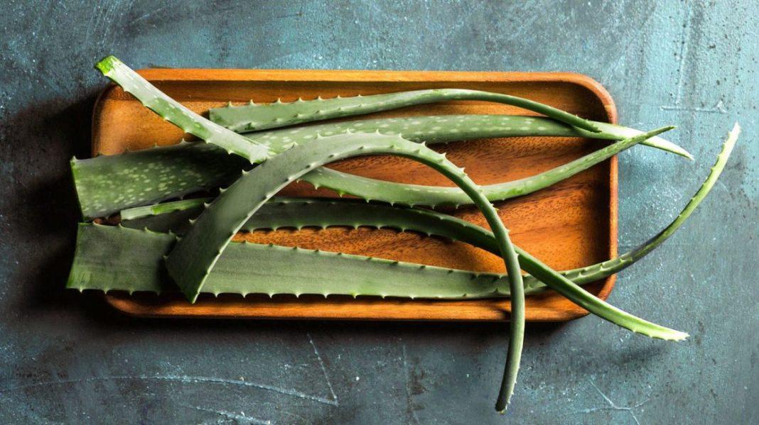 Top 10 Uses Of Aloe Vera