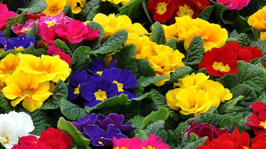 Top 10 Scented Flowers